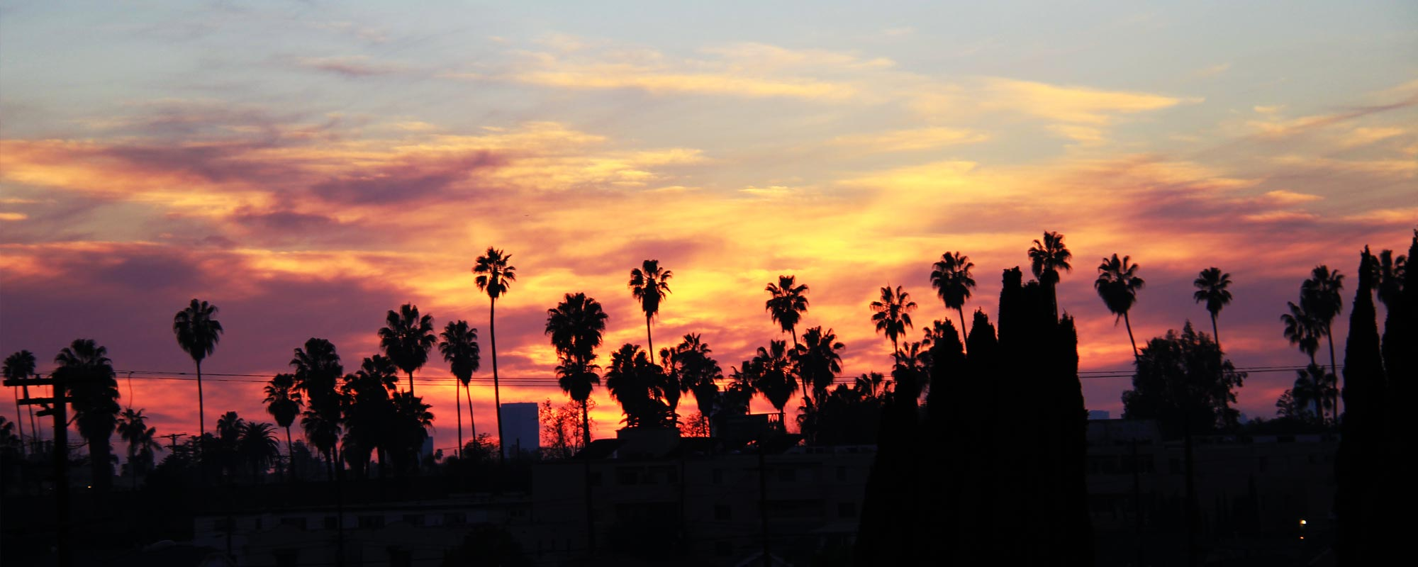 Palm trees silhouetted against a brilliant LA sunset